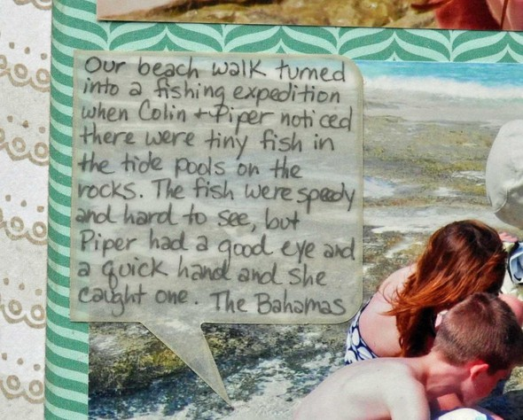 Tide pool discoveries journaling betsy gourley