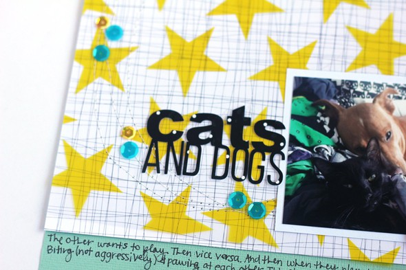Pls jamieleija cats dogs03 original