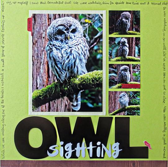05 17 owl web original