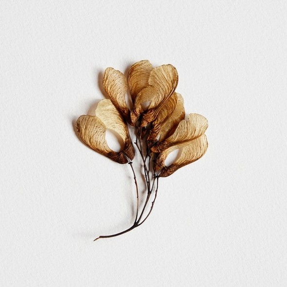 Dried blog 2