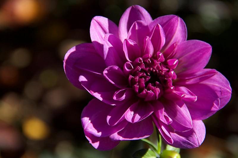 Ae flower800